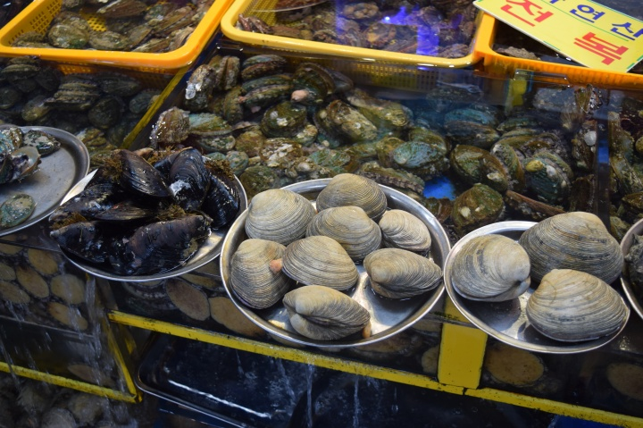 Busan fish market 013