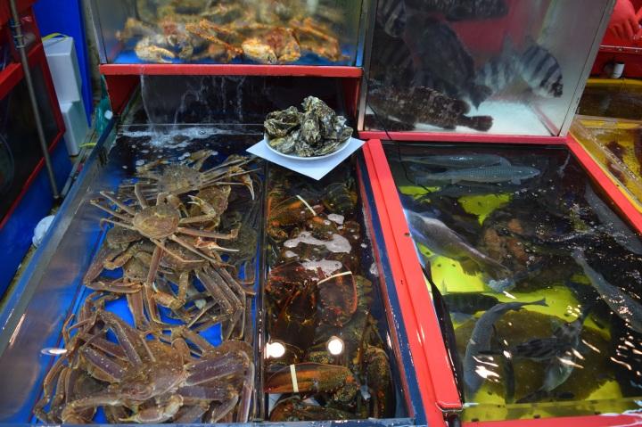 Busan fish market 023