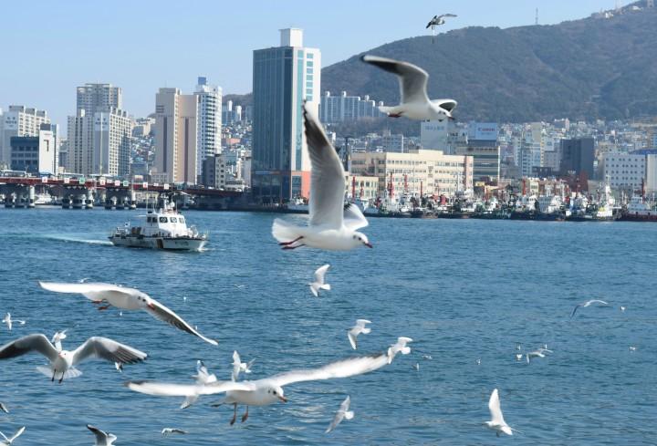 Busan fish market 041