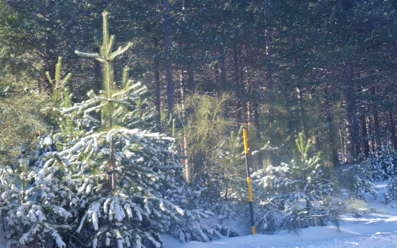 Winter mood 006