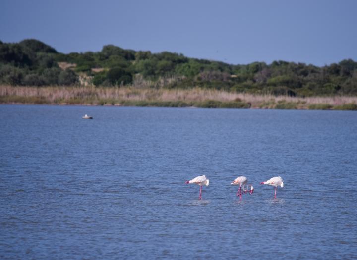Flamingos_0545