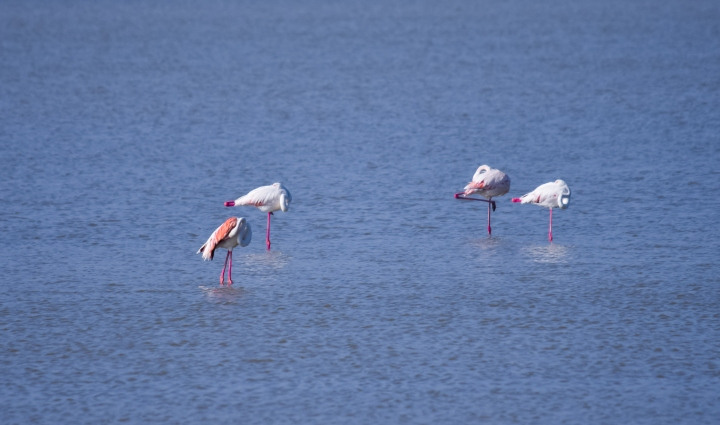 Let's talk about Flamingos and Photos.